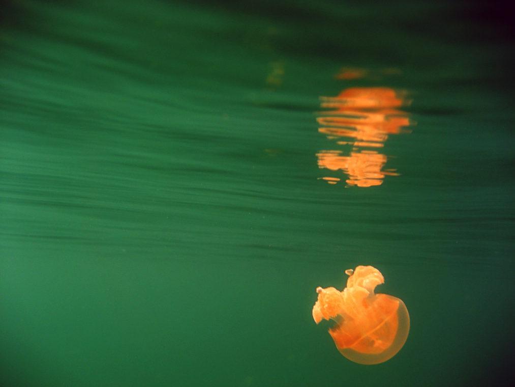 palau-001-jellyfish-lake-palau-travel-photographer-deborah-coleman-photography-01_20111225Palau168